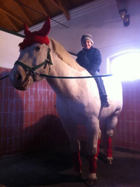 DominGo zippzáras gumis lovaglócipő - Egy lovas 98608eca5e