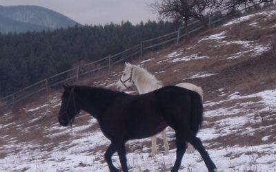 Tündi és Szuli